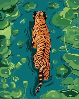 Duży pomarańczowy samiec tygrysa spaceruje po jeziorze z liśćmi hiacyntu wodnego