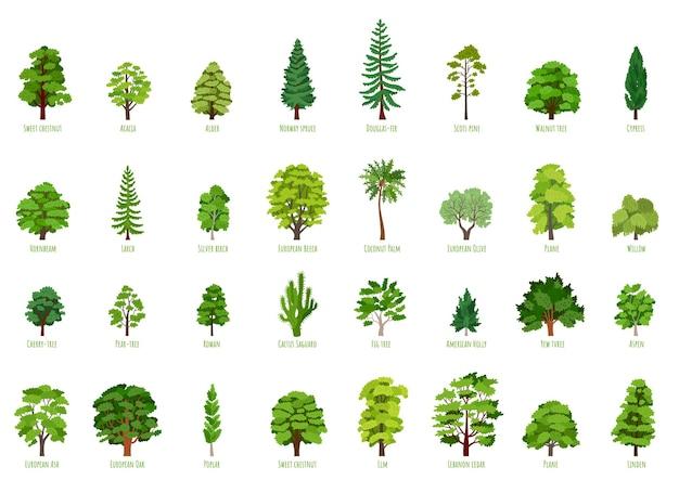 Duży wektor kreskówka zestaw z izolowanymi drzewami