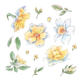 Duży zestaw akwareli delikatnych kwiatów i pozostawia super jakość