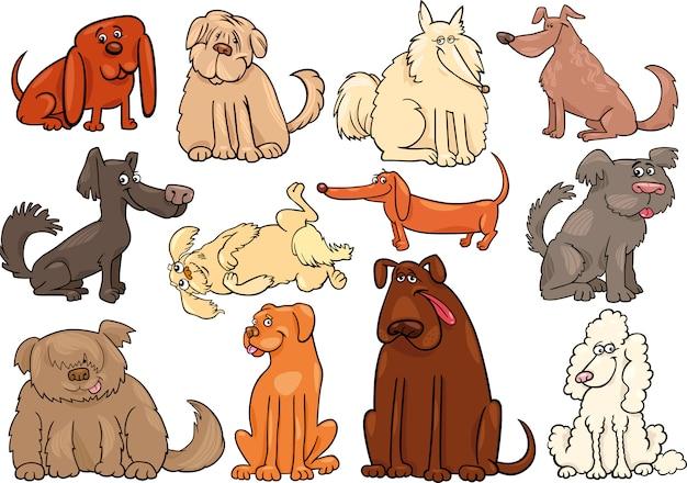 Duży zestaw dla psów lub szczeniąt