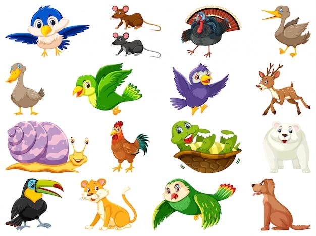 Duży zestaw dzikich zwierząt