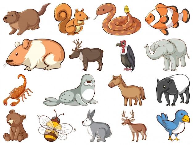 Duży zestaw dzikiej przyrody z wieloma rodzajami zwierząt