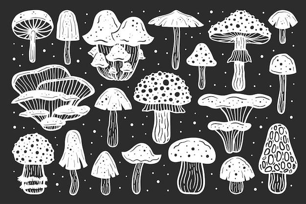 Duży zestaw grzybów leśnych.