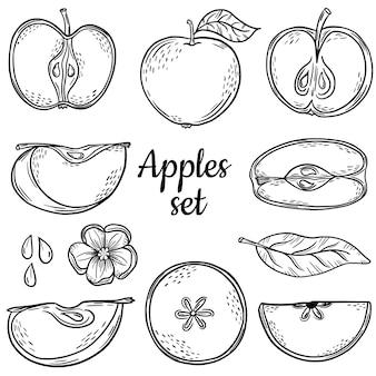 Duży zestaw jabłko szkic. rysunek odręczny. linia. zestaw