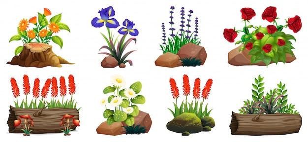 Duży zestaw kolorowych kwiatów na skałach i drewnie na białym tle