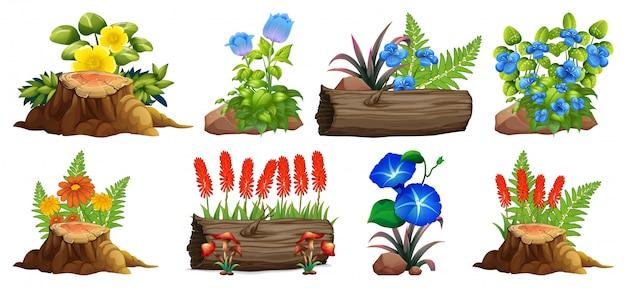 Duży zestaw kolorowych kwiatów na skałach i drewnie