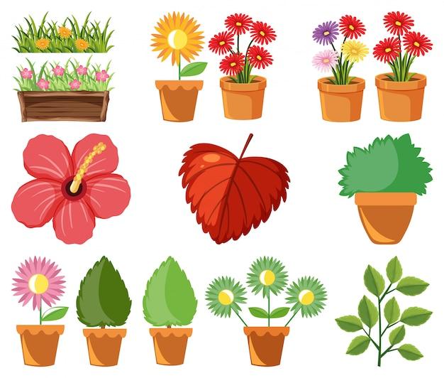 Duży zestaw natury z kwiatami i liśćmi