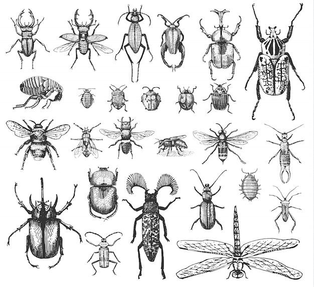 Duży zestaw owadów błędów chrząszczy i pszczół wielu gatunków w starym stylu vintage ręcznie rysowane grawerowane drzeworyt ilustracja