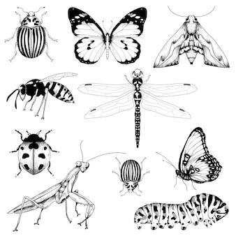 Duży zestaw owadów na białym tle