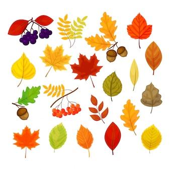 Duży zestaw z różnych jesiennych jagód, liści i żołędzi na białym tle