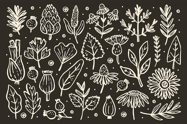 Duży zestaw ziół. rośliny leśne. kwiat, gałąź, liść, chmiel, szyszka. elementy naturalne.