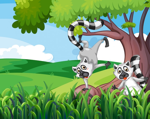 Dwa figlarne lemury w lesie