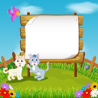 Dwa kot z czystym papierze tle w ogrodzie