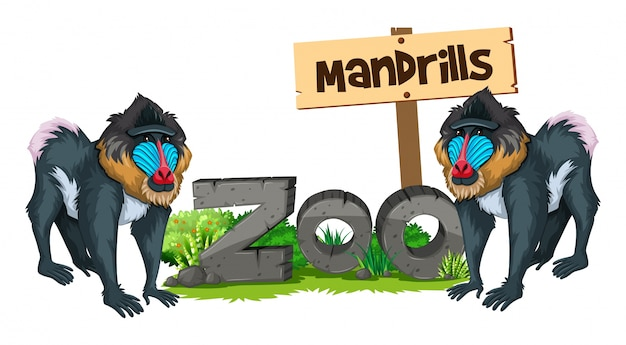 Dwa mandrills w zoo
