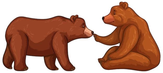 Dwa niedźwiedzie brunatne na białym tle