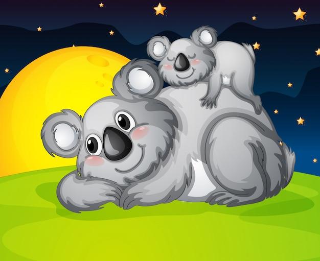 Dwa niedźwiedzie odpoczywają