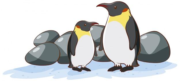 Dwa pingwiny na białym tle