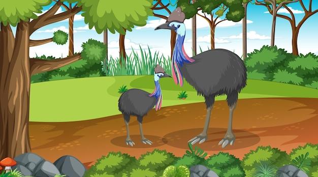 Dwa ptaki kazuary w lesie lub lesie tropikalnym na scenie dziennej