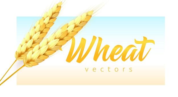 Dwa realistyczne kłoski pszenicy z napisem pszenicy na nowoczesnym emblemacie w kolorze nieba i pola