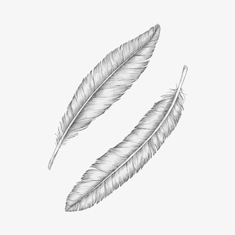 Dwa ręcznie rysowane ptasie pióra