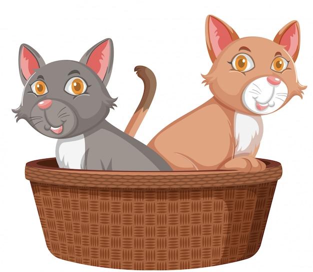 Dwa słodkie koty w koszyku