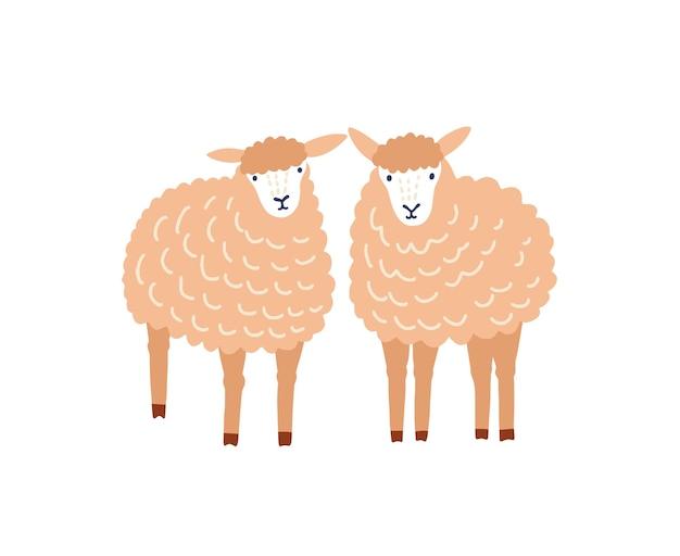Dwa słodkie owce płaskie wektor ilustracja. urocze włochate jagnięta, puszyste zwierzęta domowe na białym tle. hodowla maciorek, hodowla owiec, element dekoracyjny hodowli.