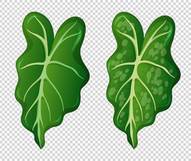 Dwa wzory na zielonych liściach