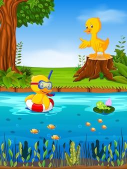 Dwie kaczki i żaby w rzece
