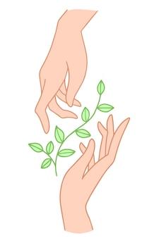 Dwie ręce trzymają kwiatową roślinę z liśćmi.