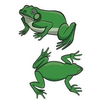 Dwie siedzące zielone żaby