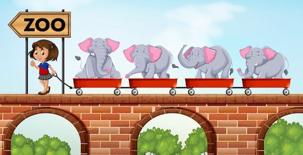 Dziewczyna ciągnie wózki załadowane słoniami do zoo