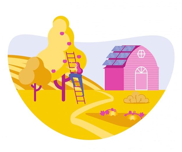 Dziewczyna rolnik zbiera żniwa jabłek