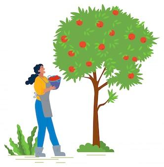 Dziewczyna w fartuchu i gumowe buty wybiera jabłka