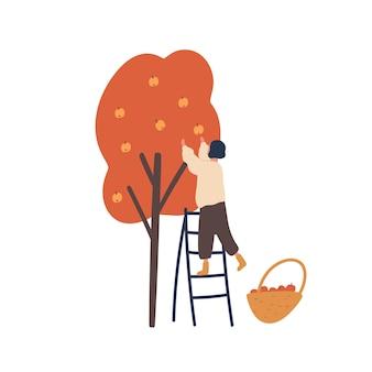 Dziewczyna zbiera jesienne zbiory płaskich ilustracji. kobieta stojąca na drabinie i zbieranie jabłek na białym tle element projektu.