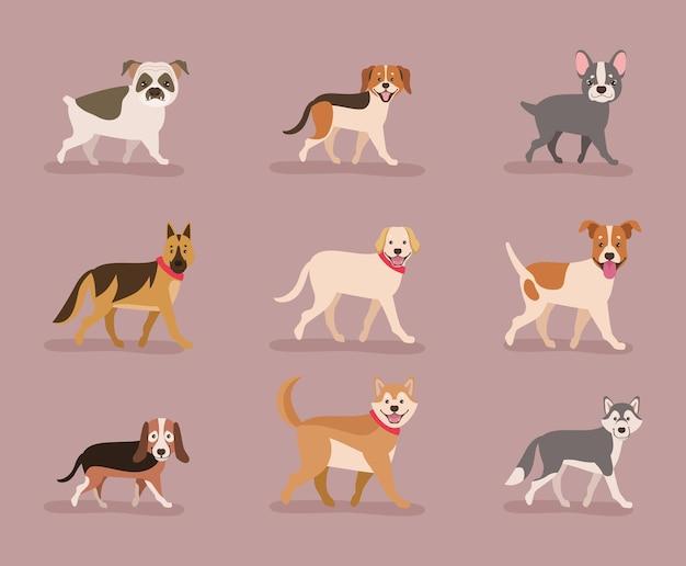 Dziewięć maskotek psów