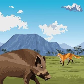 Dzika świnia i lis w krajobrazie