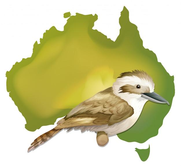 Dziki ptak w australii