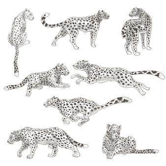 Dziki ssak mięsożerny, odosobniony lampart lub gepard