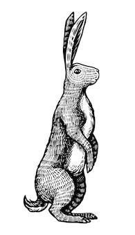 Dziki zając lub królik stoi na tylnych łapach