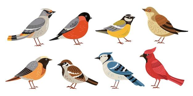 Dzikie ptaki leśne. zimowa przyroda zwierzę, ptaki chickadee robin kardynał. ilustracja wektorowa pisklę na białym tle dziki lub ogród płaski charakter pisklę. kolekcja ptasia las, kocurek i wróbel