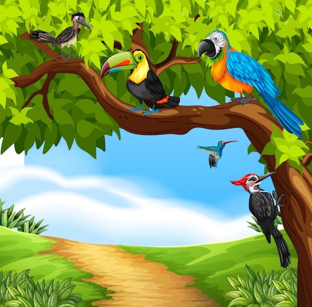 Dzikie ptaki na drzewie