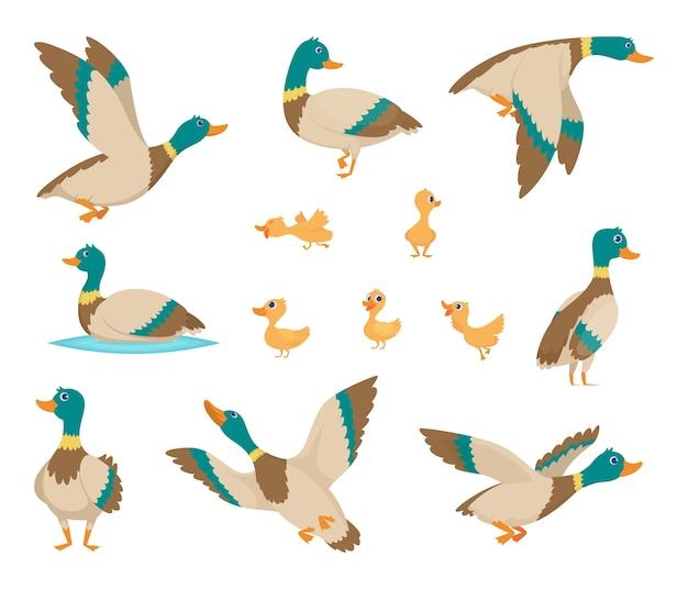 Dzikie ptaki. śmieszne kaczki latające i pływające w wodzie brązowe skrzydła wektor ptaki stylu cartoon. kaczka ptak dziki, urocza przyrody naturalna ilustracja