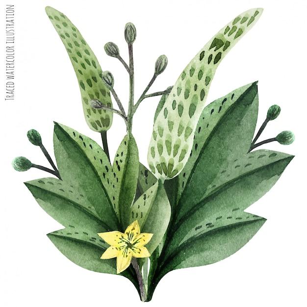 Dzikie rośliny ręcznie malowane akwarela butonierka