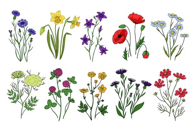 Dzikie zioła i kwiaty. polne kwiaty, rośliny łąkowe. ręcznie rysowane kwitnienia latem i wiosną. vintage na białym tle zestaw