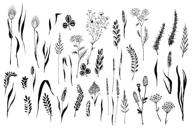 Dzikie zioła i kwiaty pomalowane czarną linią.