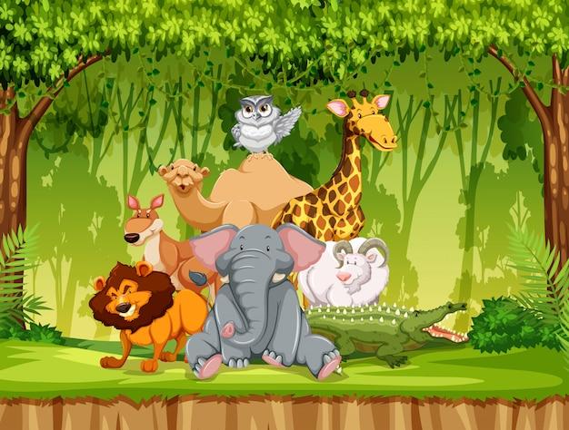 Dzikie zwierzę w dżungli