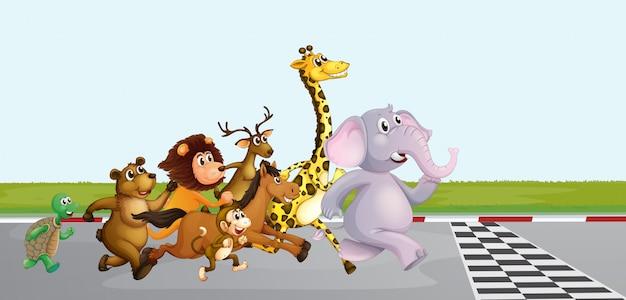 Dzikie zwierzęta biegną po drodze