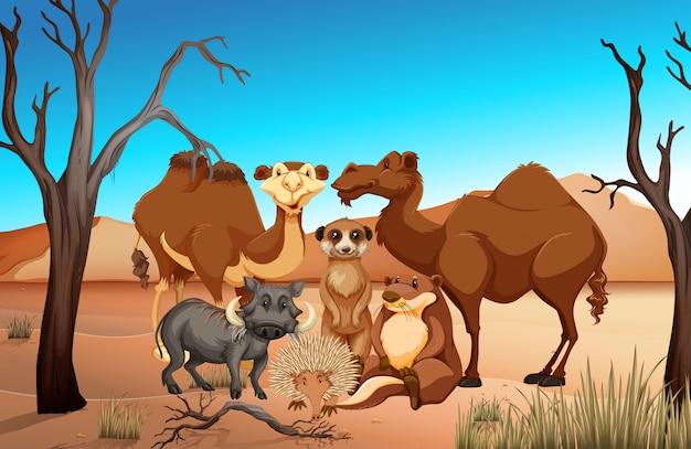 Dzikie zwierzęta na polu sawanny