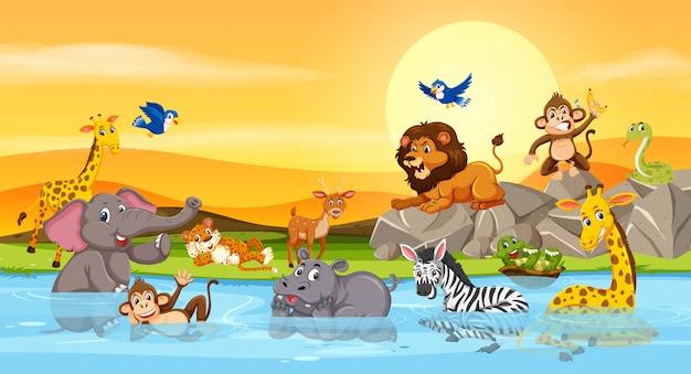 Dzikie zwierzęta nad rzeką zachód słońca
