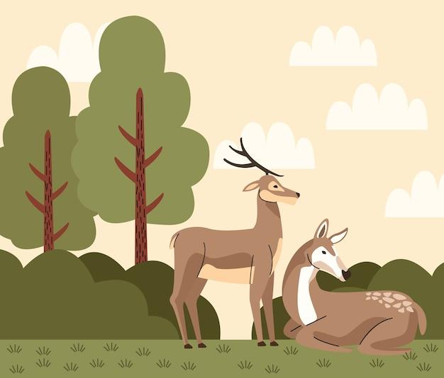 Dzikie zwierzęta renifery na scenie obozu